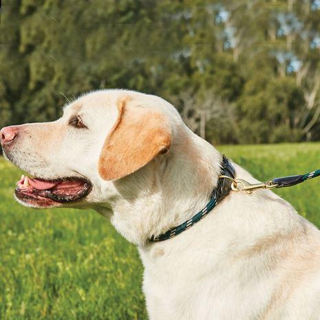 WeatherBeeta Rope Leather Dog Lead